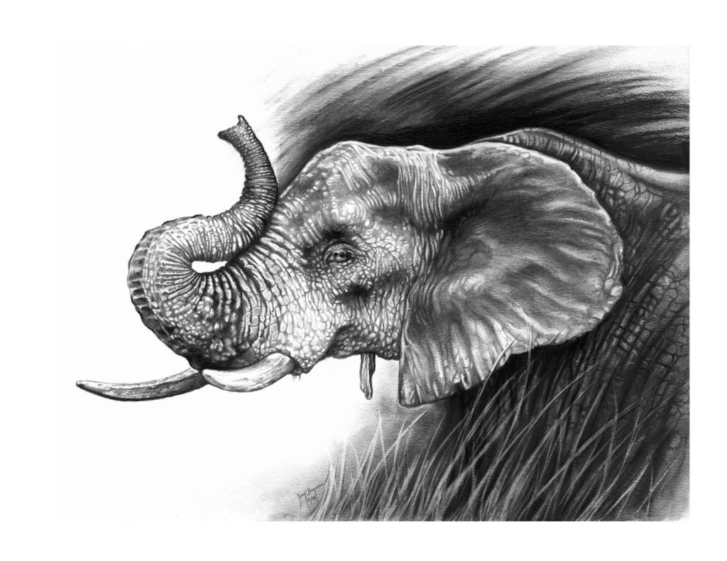 completed charcoal drawing of elephant